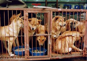 Moran Dog Meat Market