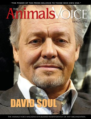 David Soul and The Animals Voice