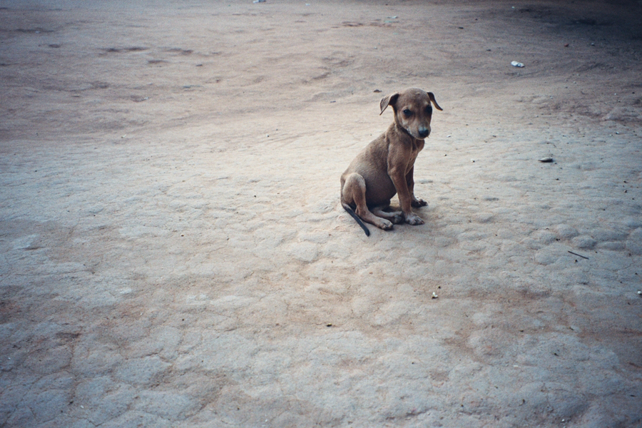 David Soul & Asia's Dogs